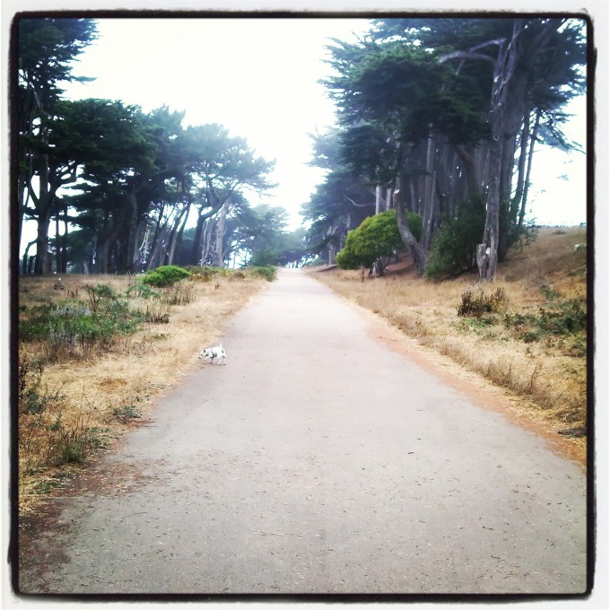 EARLY WALK WITH MY DOG EMMA
