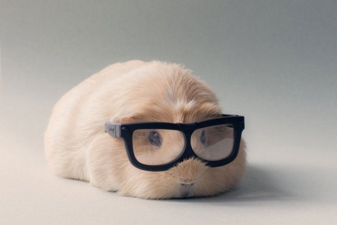 "Meet Booboo, an adorable guinea pig that is the muse of a photographer who goes by the nickname ""Lieveheerbeestje."" Her photos of little Booboo and her friends look like professional fashion shots for Guinea Pig Vogue magazine."